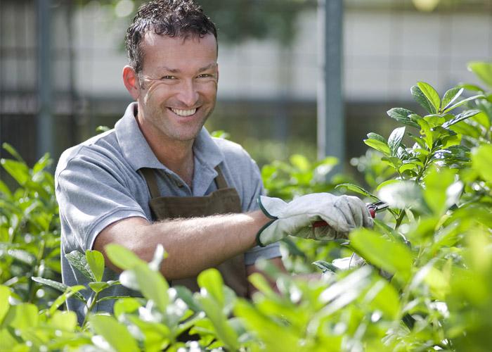 jardineria-fumigacion-principal